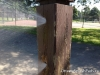 Two sprays on a wooden post